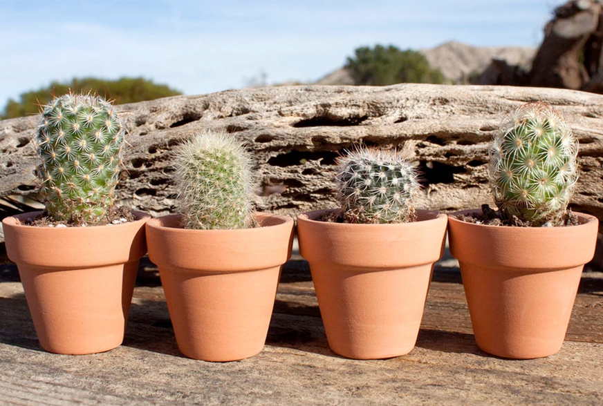 cactus-mart-slider4