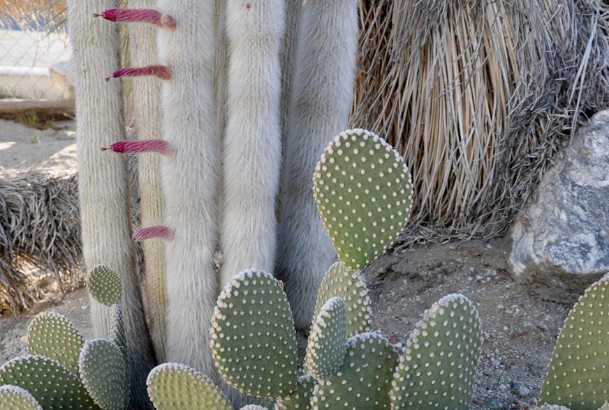 cactus-mart-slider5